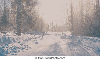 Winter forest in a hoarfrost. Snowfall. - Winter forest in a...