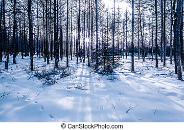 Winter forest in China
