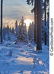 winter forest in Harz mountains, Germany at sunset