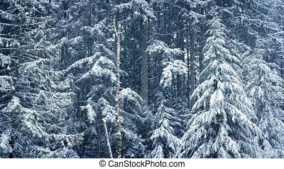 Winter Forest In Heavy Snowfall