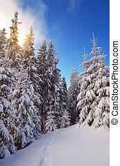 Winter forest in mountains - Frosty day in a mountain forest...