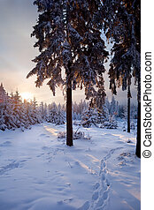 winter forest in mountains