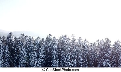 Winter forest in snow and fog. Aerial view