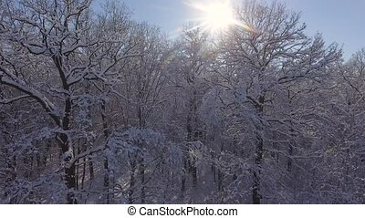 Winter Forest in Snow. Christmas or New Year time