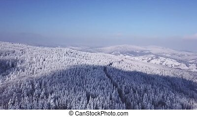 Winter forest in sunny weather, snowflakes fall. Aerial view...