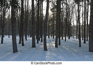 Winter forest in the South park