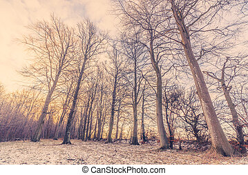 Winter forest in the sunrise