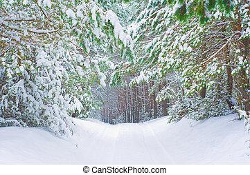 Winter forest in winter season