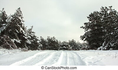 Winter forest landscape and road