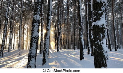winter forest landscape and sunset