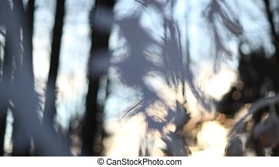 Winter forest landscape, focus play
