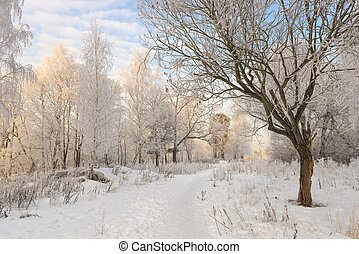 winter forest landscape in good weather