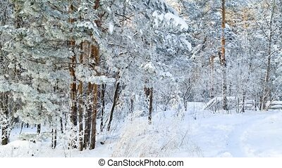 Winter forest landscape. Trees covered with ice in severe frost.