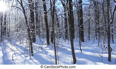 winter forest landscape with snow and sunlight