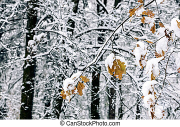 winter forest landscape with trees covered with first fluffy snow