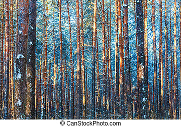 Winter forest nature snow woods background - Winter forest ...