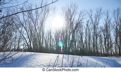 Winter forest nature trees in the snow glare of the sun, sunlight landscape