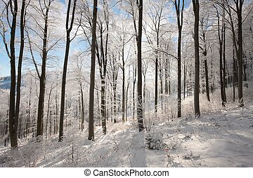 Winter forest on a sunny morning