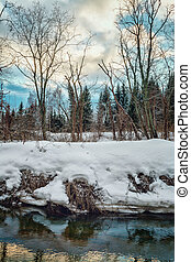 Winter forest on the banks of river with ice.