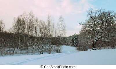 winter forest, panorama