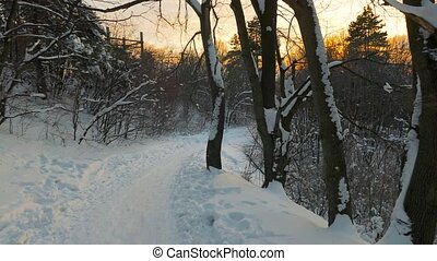 Winter forest path - Walking on snowy forest path, POV...
