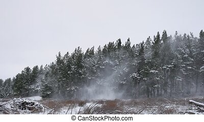 Winter forest pine forest with snow wind storm nature landscape beautiful tree winter christmas background