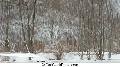 Winter forest reflected in the river - vibrant winter forest...