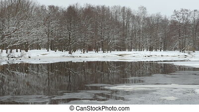 Winter forest reflected in the river - Winter beautiful...