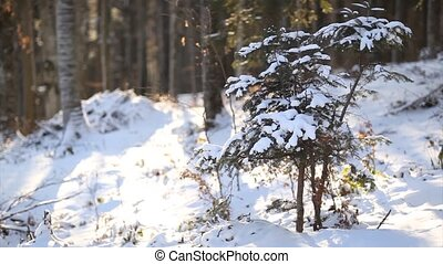 Winter forest scenery - panning up