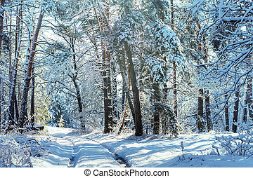 Winter forest - Scenic snow-covered forest in winter season....