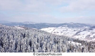 Winter forest shooting with copter. View from above . Aerial...