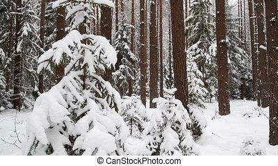winter forest, slider