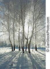 Winter forest - Cold winter day, beautiful hoarfrost and...