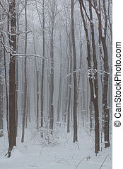 Winter Forest - Frosted winter forest