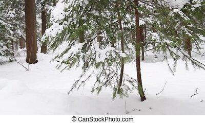winter forest, the slider
