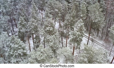 Winter Pine Forest Tilt and Pan shot over road - Orbit Drone view on a snowy Pine forest road during snowy weather. Orbiting Drone Flight over a winter Forest with dirty road on a frosty day.