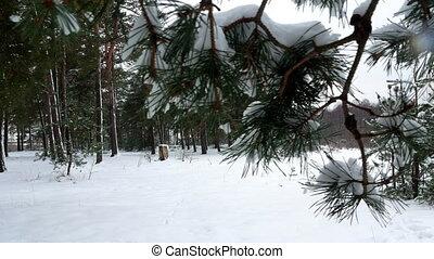 winter forest tree pine snow 4k