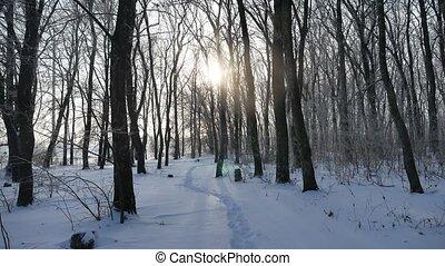 winter forest tree trunks in the snow nature landscape sunlight sun glare