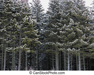 Winter forest. Trees in the snow.