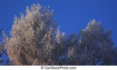 Winter Forest. Trees under snow. 4K.