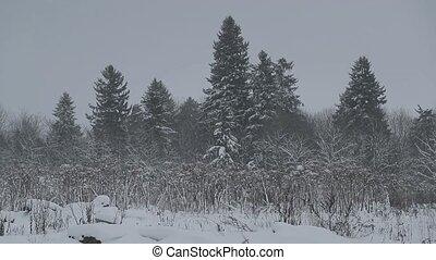 winter forest under snow.