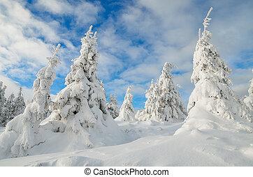 Winter forest under snow