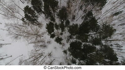 Winter forest view from above 90 degrees, smooth motion,...