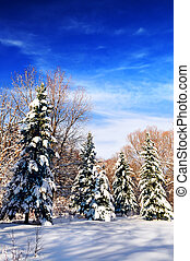 Winter forest - Winter landscape of a sunny forest after a ...