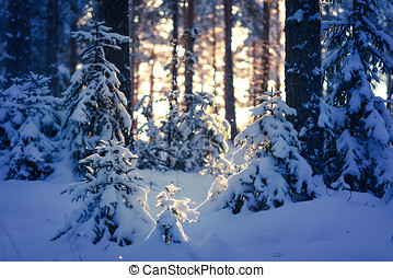 Winter Forest - Winter light with sunshine in the forest