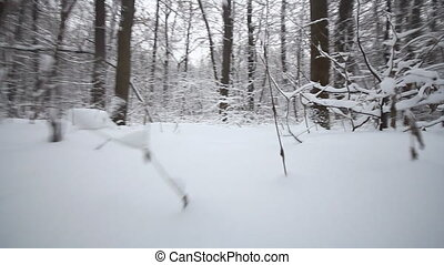 Winter Forest - Winter wood in a snowfall the top view on...