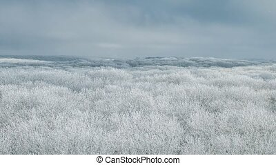 winter forest with a bird's eye view - Beautiful winter...