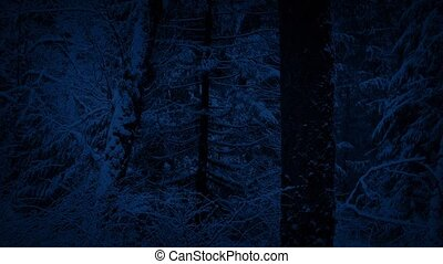 Winter Forest With Snow Falling At Night