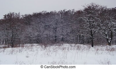 Winter Forest with Snowy Tree - Winter forest with snowy...