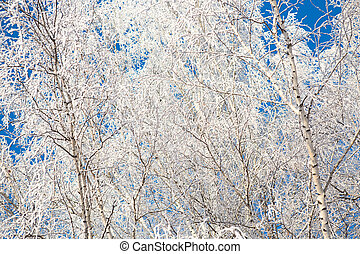 Winter forest with trees covered in snow and frost